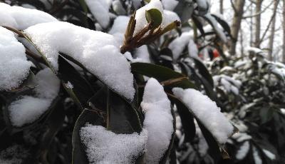 青島本周將迎冬雪 中北部地區或將有大雪