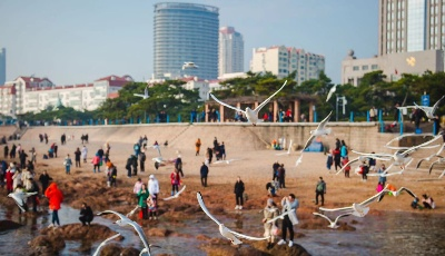 6條民俗線路助力冬季青島游 20組洋家庭扎推來過中國年