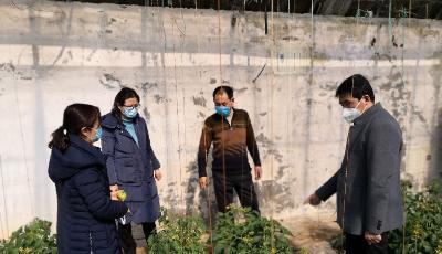 青島市農業農村局印發施肥指導意見 引導農民合理運籌水肥