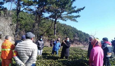 崂山区:精准施策抢农时 促进崂山茶绿色发展