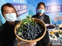 线上蓝莓节 云端带致富