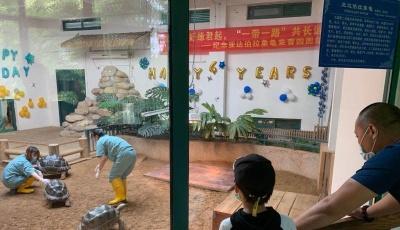 青岛市动物园举办象龟落户青岛四周年纪念活动