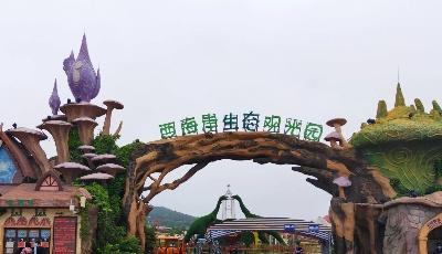 青岛美食环游记:打卡西海岸生态观光园,正好遇到薰衣草的花期