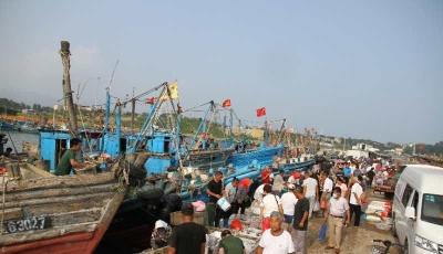 开海第一网  渔民喜获丰收