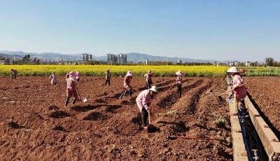 土壤墒情、天气条件适宜,青岛今年首发春耕春播气象服务专报