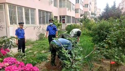 1000余平!嶗山區集中整治圈綠種菜 清理菜地60余處